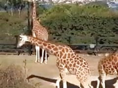 Two Sluts Visit The Zoo